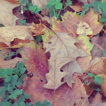 Herbstlaub und Klee